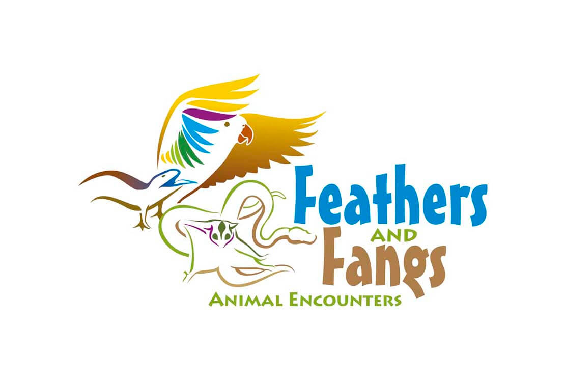 custom illustration logo for feathers
