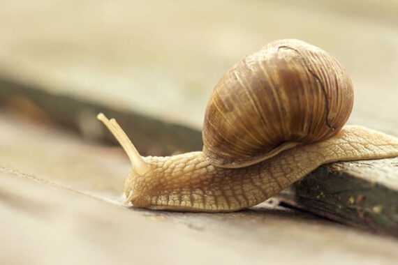 slow moving snail like a slow loading website